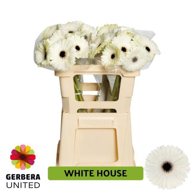 <h4>GE GR WHITE HOUSE</h4>