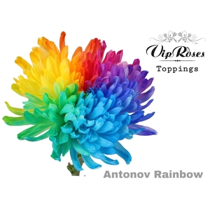 CHR R ANTONOV RAINBOW