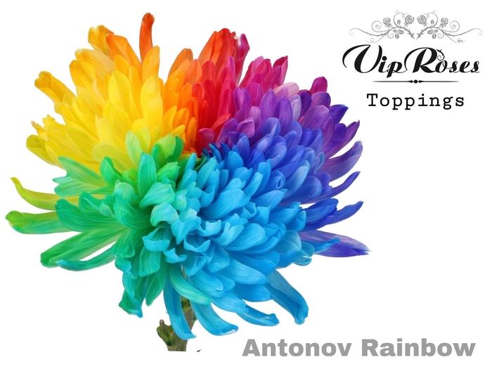 <h4>CHR G ANTONOV RAINBOW</h4>