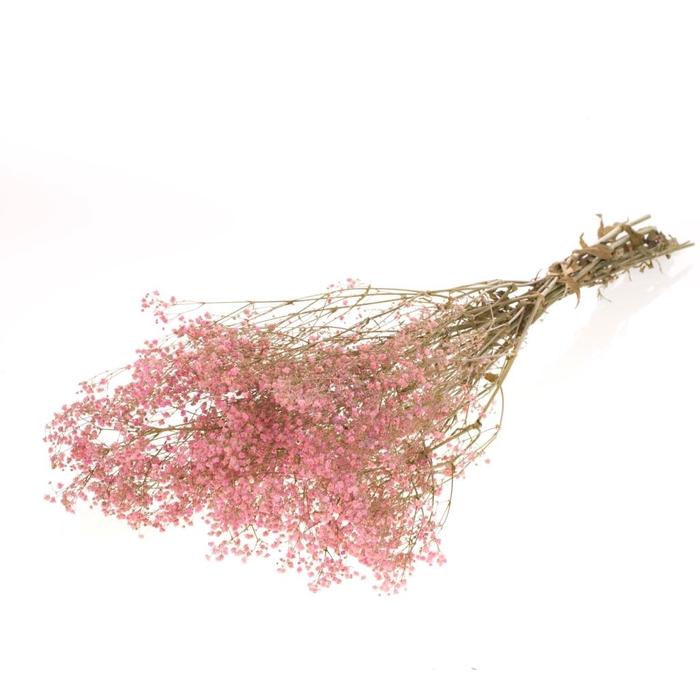 <h4>Gypsophila stab.pink bleached</h4>
