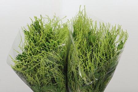 <h4>Dec Acacia Green</h4>