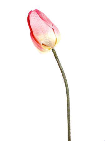 <h4>Flower Lotus1 pink</h4>