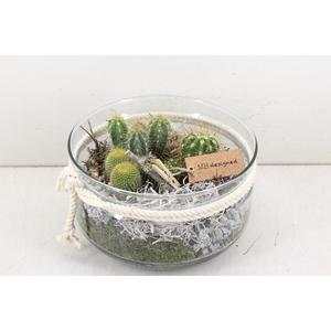 arr. MB Cactus - Glas bose XL