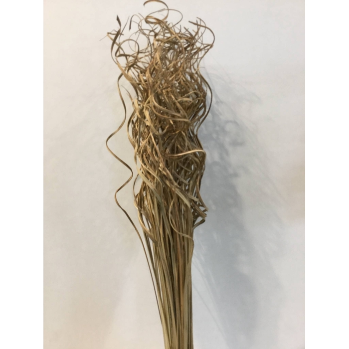 <h4>DRIED FLOWERS - CURLY TING TING NATURAL 100PCS</h4>