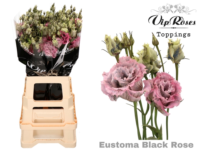EUST G ALISSA BLACK ROSE