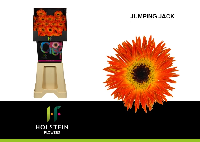 <h4>Gs Spider Jumping Jack</h4>