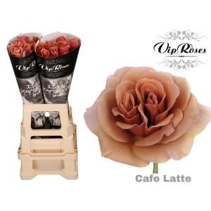 R GR CAFE LATTE x 20