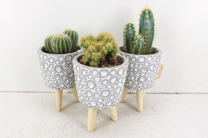 <h4>arr. UB - Cactus op pootjes bubbel L</h4>