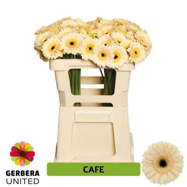<h4>GE MI CAFE</h4>