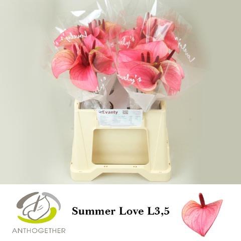 <h4>ANTH A SUMMER LOVE 40 L3,5.</h4>