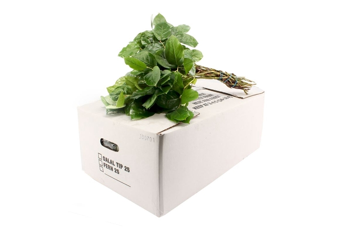 <h4>SALAL TIPS WHITE BOX</h4>