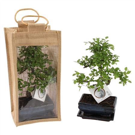 <h4>Bonsai A1152934 Gemengd Keramiek + Jute Giftbag</h4>