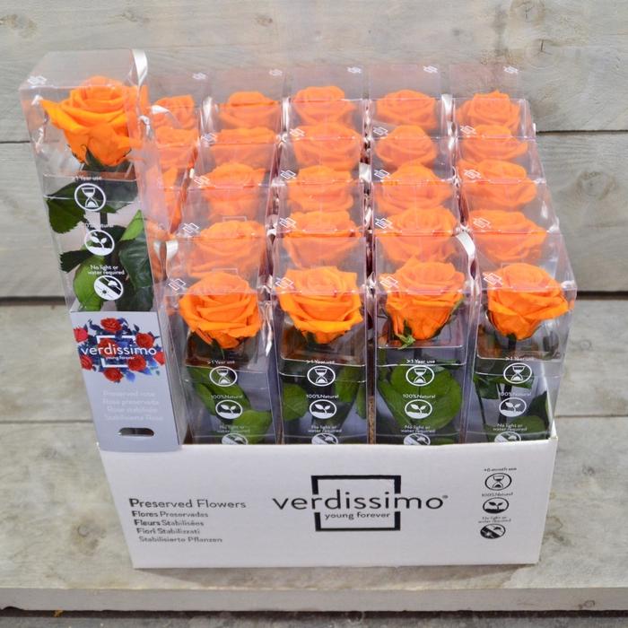 <h4>R PR Amorosa Mini Orange</h4>
