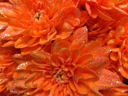 <h4>Chr T Baltica Apricot + Glit</h4>