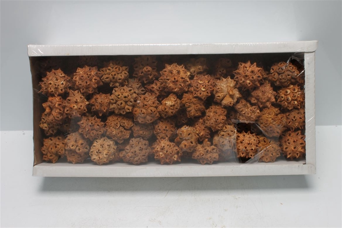 <h4>Spidergum Knobs Orange Frosted (100 St)</h4>