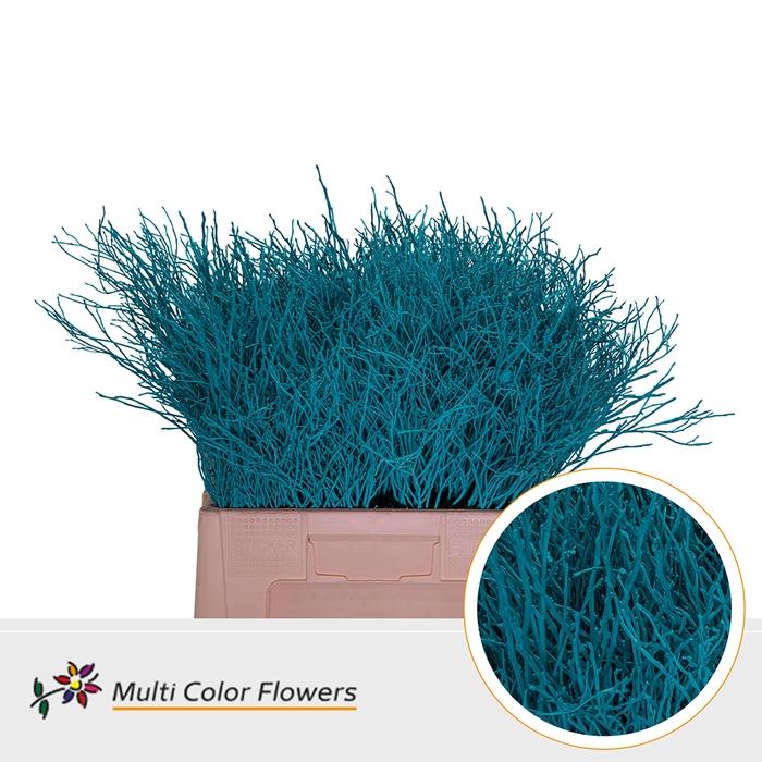 <h4>Heidelbeer Turquoise</h4>