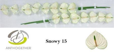 ANTH A SNOWY (MINI )