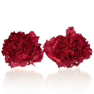 Carnation (anjer) Red 4,5-5cm