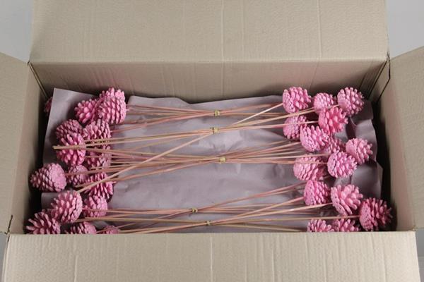 <h4>Stick Pine Cone  Wax Pink</h4>