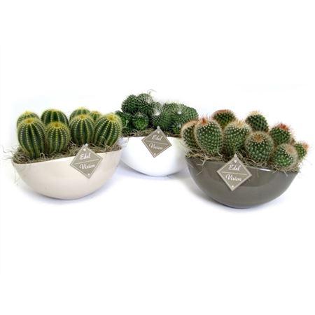 <h4>Edel- Ev778 Cactus Gemengd Keramiek Ovaal</h4>