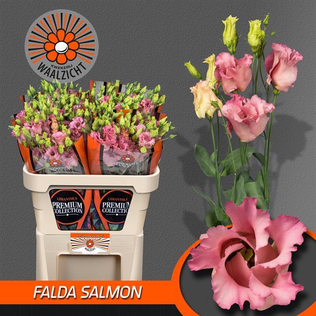 <h4>EUS E FALDA SALMON</h4>