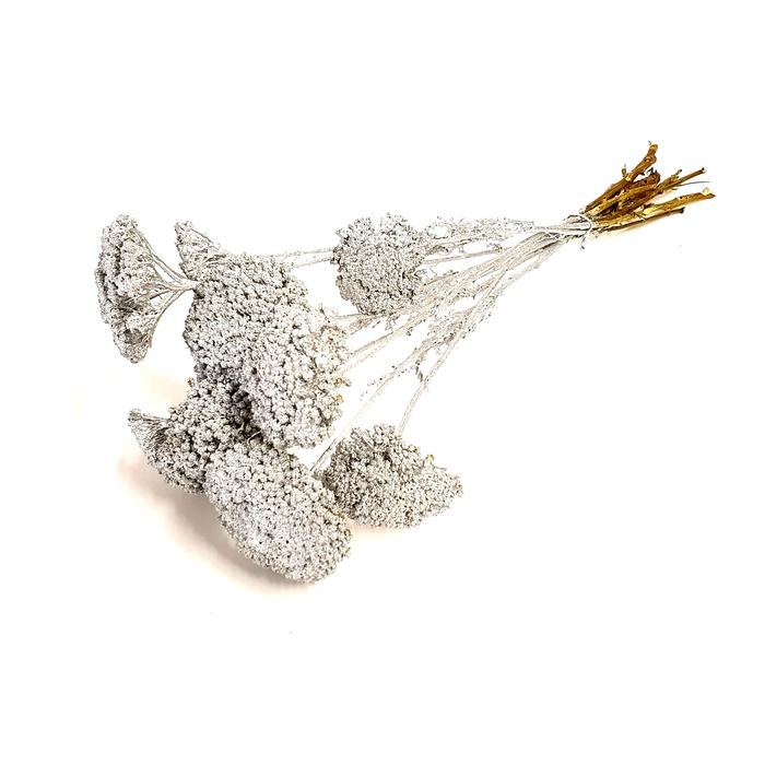<h4>Achillea per stem Silver</h4>