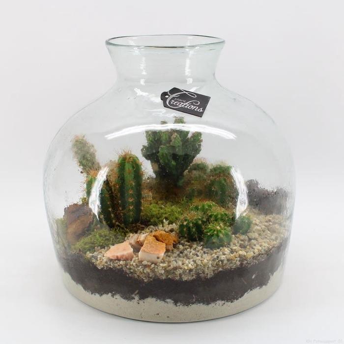 <h4>Arr.  Cactus H%</h4>