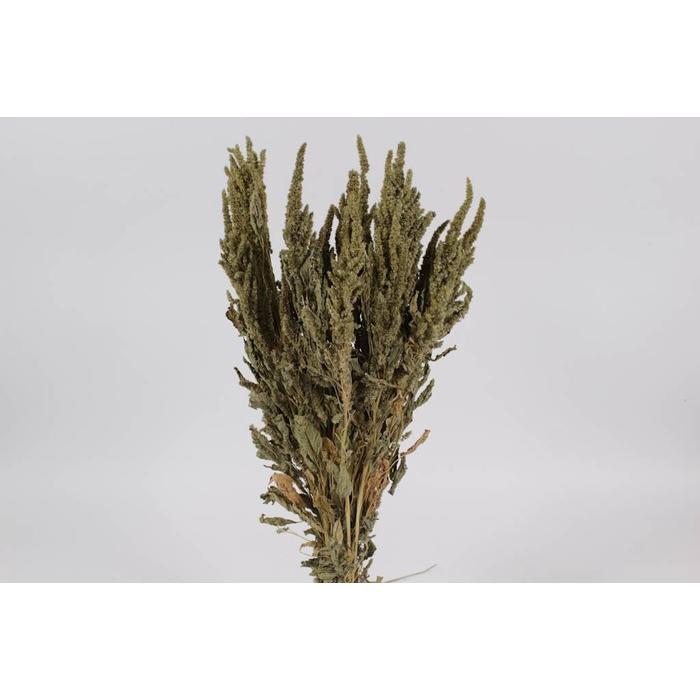 <h4>Amaranthus per bunch Green</h4>