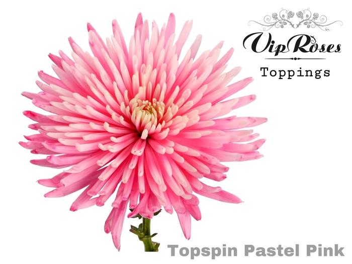 CHR G TOPSPIN PASTEL PINK