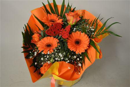 <h4>Aqua Klein Oranje</h4>