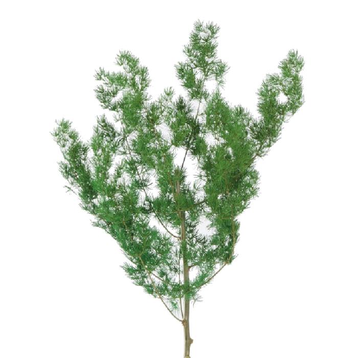 <h4>Ming Fern Green</h4>