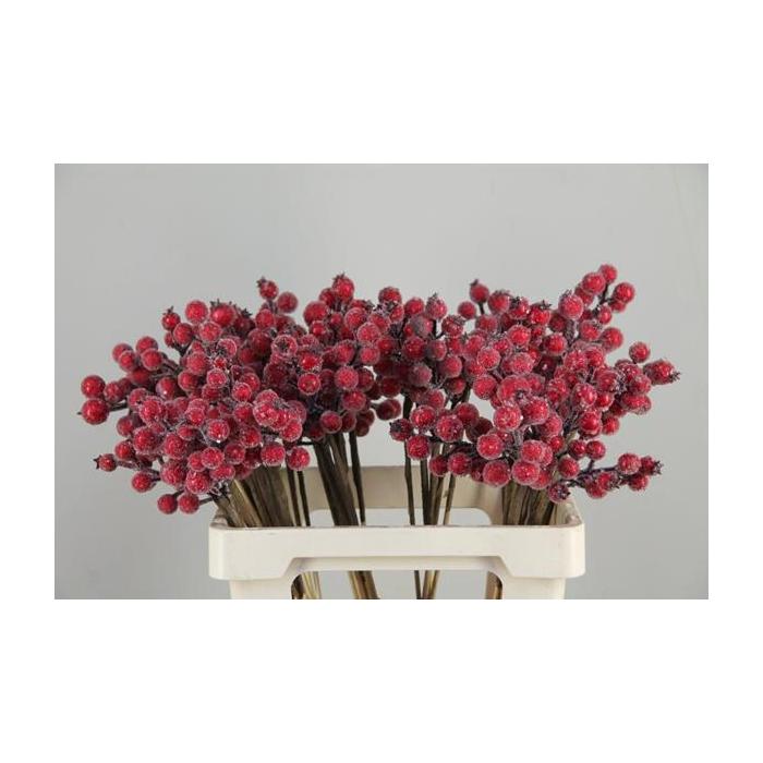 <h4>Stick Berries Rose Hips Snow</h4>