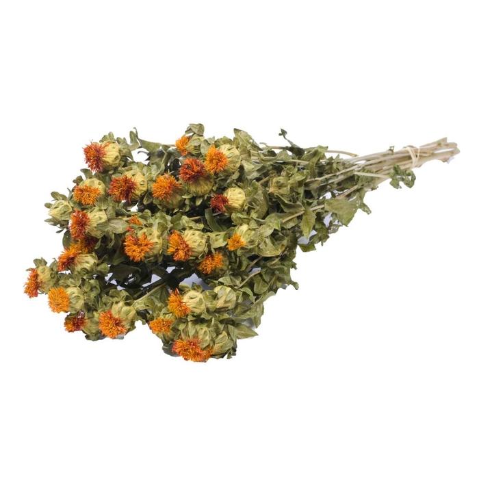 <h4>bidens(Carthamus) orange nat.</h4>