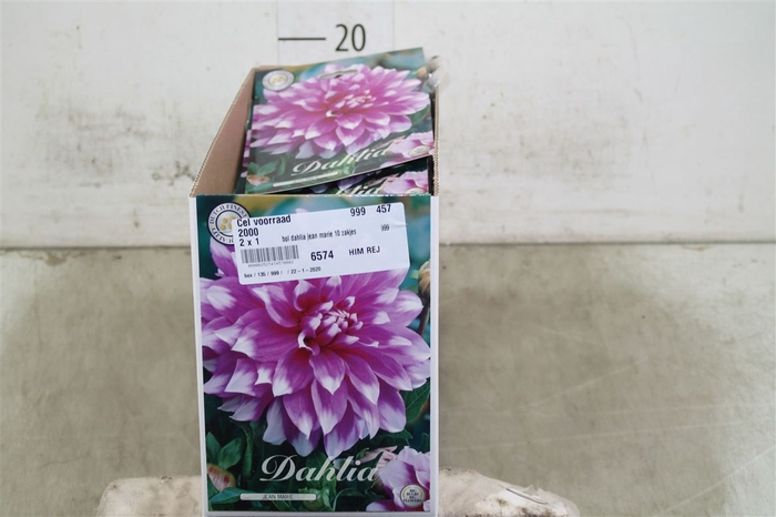 <h4>Bol Dahlia Jean Marie 10 Zakjes X1</h4>