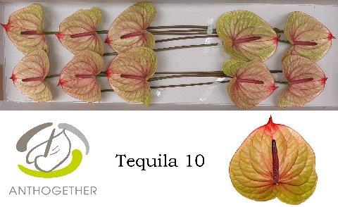 <h4>ANTH A TEQUILA</h4>