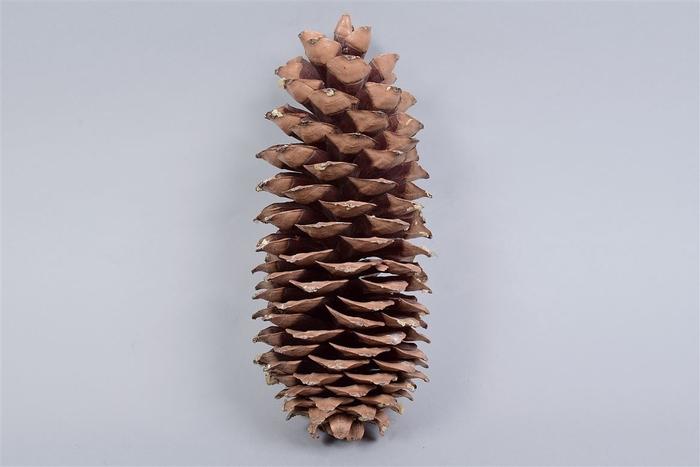 <h4>Natuur Sugar Pine Xl Per 1</h4>