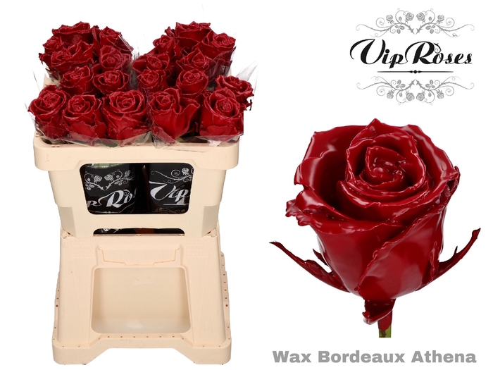 <h4>R GR WAX BORDEAUX (ATHENA)</h4>