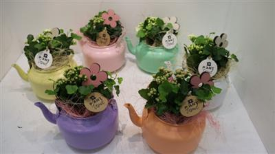 <h4>4457 Theepot PASTEL!!</h4>