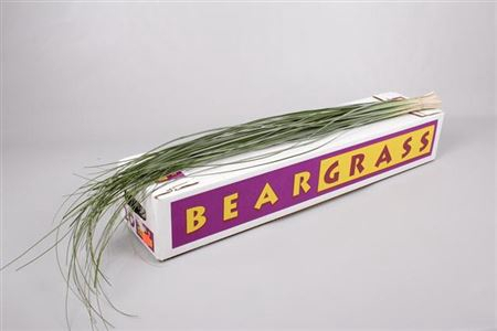 <h4>BEARGRASS BOS</h4>