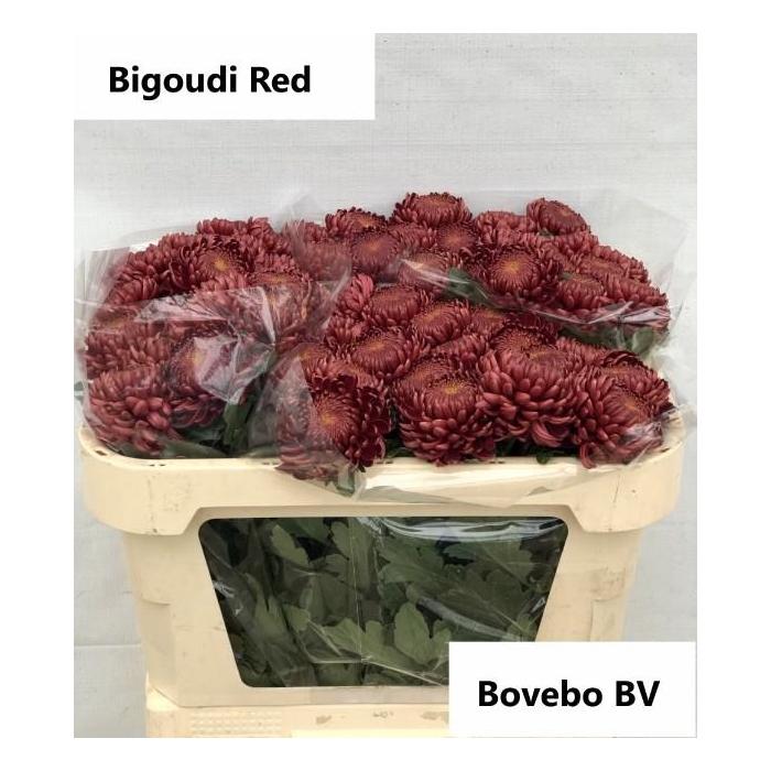 <h4>CHR G BIGOUDI RED</h4>