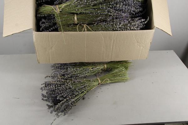 <h4>Df Lavendel Bs 65g</h4>