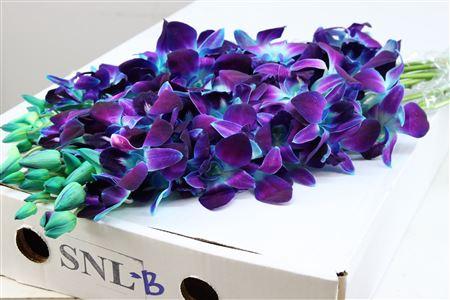 <h4>Dendrobium Geverfd Blauw Lila-wit</h4>