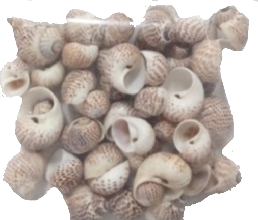 <h4>Shell Pull muttai  1 kg in poly</h4>