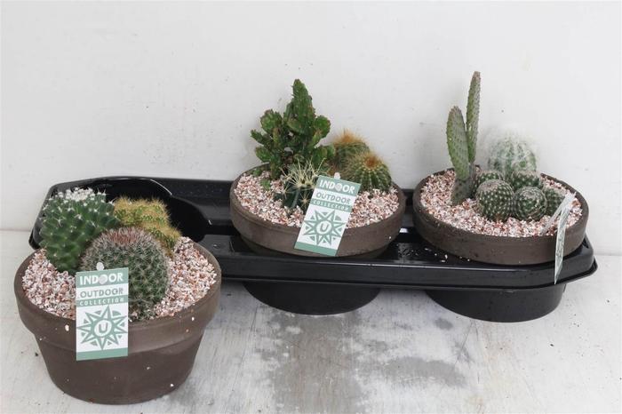 <h4>Arrangement Cactus Grijze Schaal #</h4>