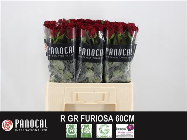 <h4>R GR FURIOSA</h4>