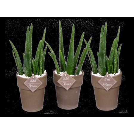 <h4>Edel- Av14 Aloe Vaaspot + Houtsnippers</h4>