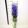 Delphinium azul