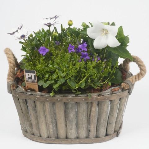 <h4>ALSM10 Arrangementen planten in schaal</h4>