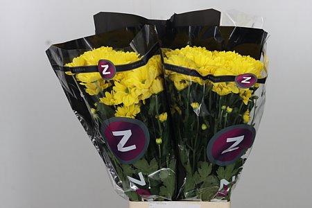 <h4>Chr T Celebrate Yellow</h4>