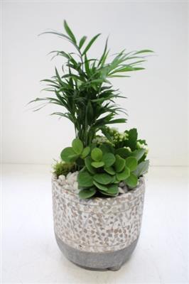<h4>PTS101 Diarra Plants</h4>